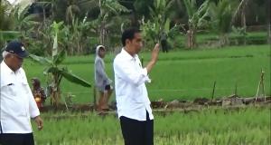 Pantau Pembangunan Irigasi, Warga Berebut Salaman Dengan Jokowi