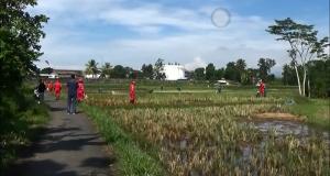 Pipa Pertamina Diduga Bocor, Lahan Pertanian Warga Tasik Tercemar